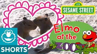 Sesame Street: Elmo Loves Animals (Elmo At The Zoo)