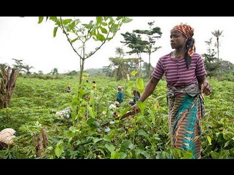 Le Gabon se tourne vers le secteur agricole pour faire face aux faibles prix du pétrole