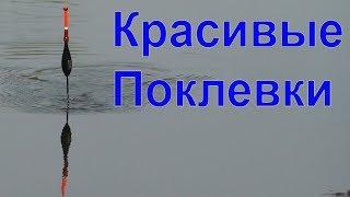 подборка КРАСИВЫХ ПОКЛЕВОК. Рыбалка, Поплавочная удочка, Fishing, ikan, câu cá, memancing