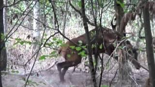 Schwytany we wnyki jeleń wrócił do lasu - www.pulsmiasta.tv