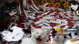 츄르 천 개를 선물 받은 고양이들!