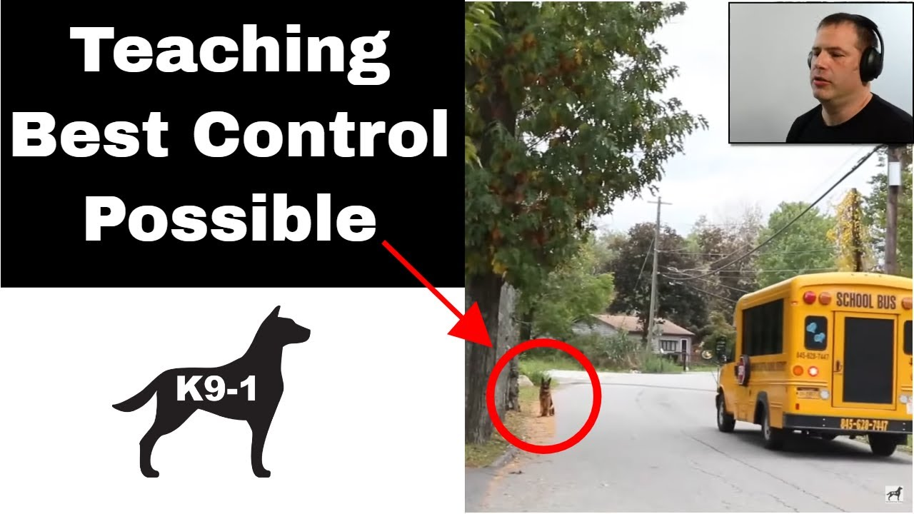 Avoidance Conditioning in Dog Training Obedience (K9-1.com)