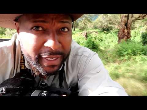 Safari Tanzania #1