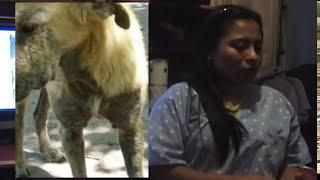 Diferencia entre la Sarna y Alergias en Perros y Gatos