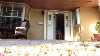 Controlled Exit At The Front Door - Dog Obedience Training, Miami