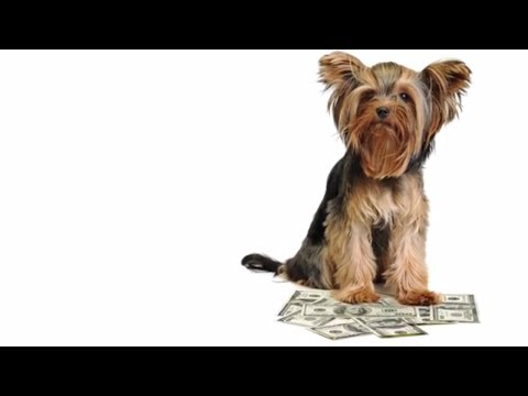 Costs of Pet Ownership | Pets Plus US