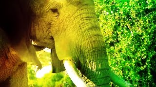 Veterans Are Saving The Elephants! | TakePart Live