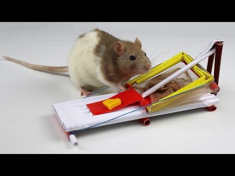 How to Make a Simple Mouse Trap from Paper
