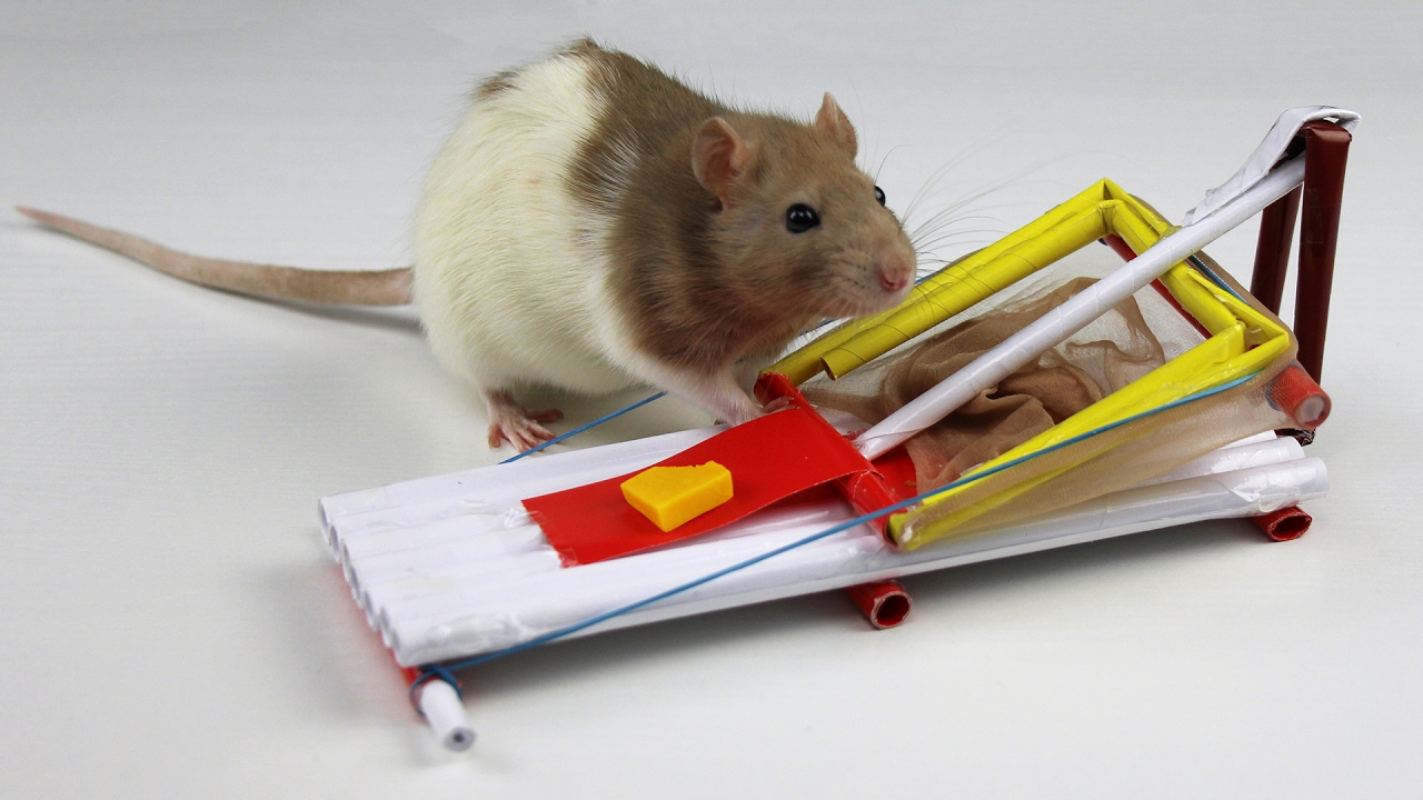 How to Make a Simple Mouse Trap from Paper - YouTube
