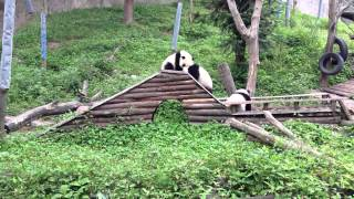 Panda Kindergarten - Rutsche