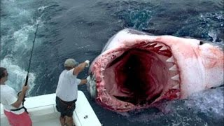 Repeat youtube video Megalodon found? Great white shark eaten by sea monster; Goat-human hybrid? - monsters compilation