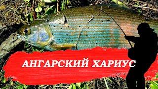 Рыбалка на хариуса Ангарский хариус