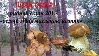 Грибной сезон 2013 белый гриб, масленок  козляк