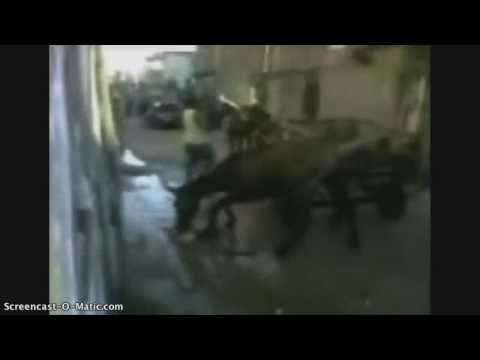 Pit bull attacks the wrong horse!