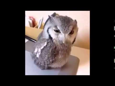 1 hour Owl hey!