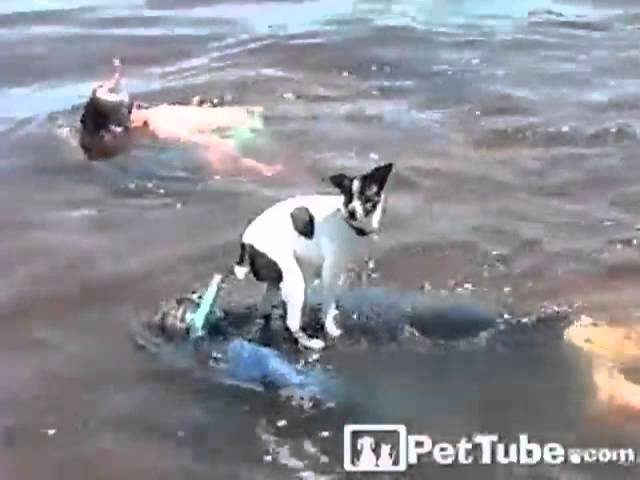 Pup Goes Boating- PetTube