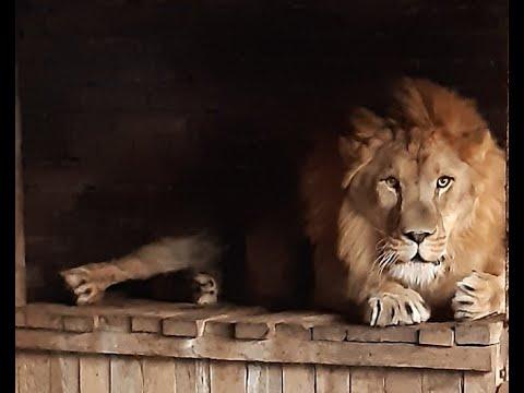Славгородский зоопарк, Алтайский край