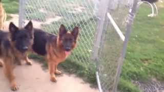 Dogs must wait for the command to go out of the door/gate