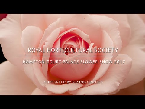 RHS Hampton Court Palace Flower Show | Festival of Roses