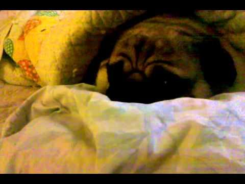 Lulu in the morning
