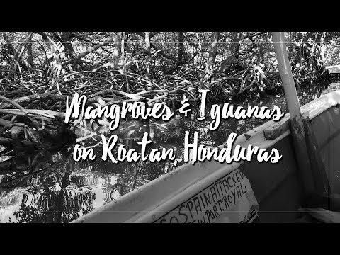 Of Mangroves and Iguanas: A Travel Spotlight on Roatan, Honduras