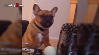 Funny Videos Of Funny Animals   Try Not To Laugh Challenge 2016