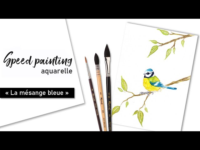 TIMELAPSE - Illustration aquarelle « La mésange bleue »