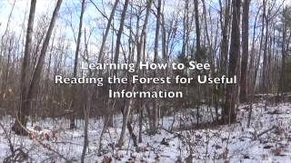 Learning how to See: Reading the Forest for Meaning