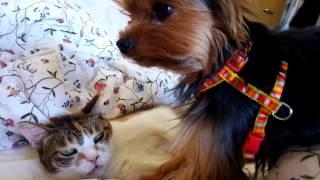 トミーちゃんとマロンちゃんは大好きなお友達です。