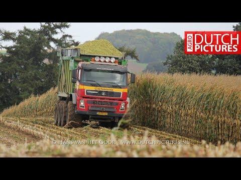 Mais hakselen 2017 | Terberg mais truck | Claas Jagaur 950 | Cerfontaine | häckseln | maize harvest