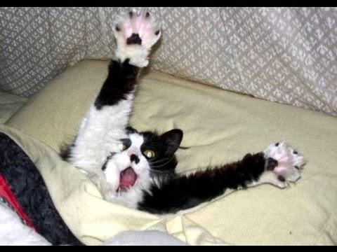 Смешные кошки. Испуганные кошки