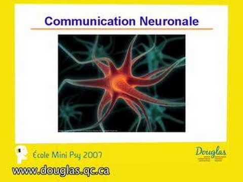 Notre cerveau si fantastique (cours)