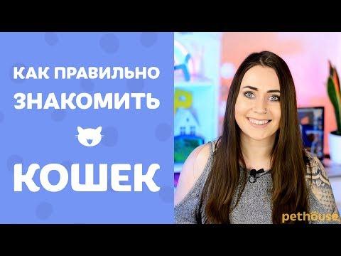 Как познакомить кошек друг с другом? Мои советы и личный опыт
