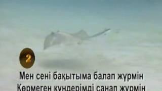 Жүрегім жүрегіңмен егіз бе еді. Т.Серіков Kazakh Karaoke, Казахское караоке