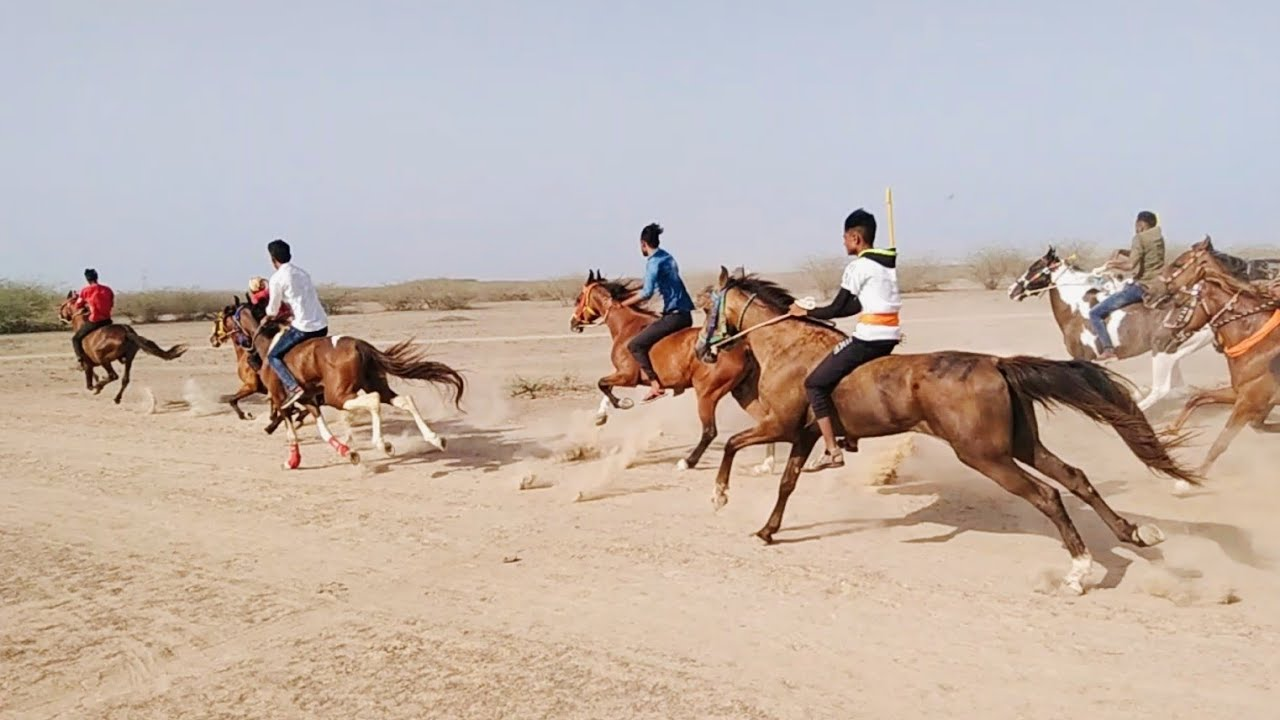 Horse race Targdi Kutch