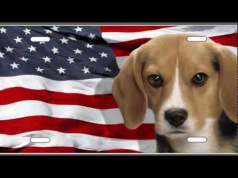 Beagles The Whole Truth : By Bugsy Cline