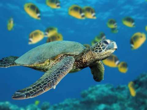 Aquarium Carnival of animals  SaintSeans