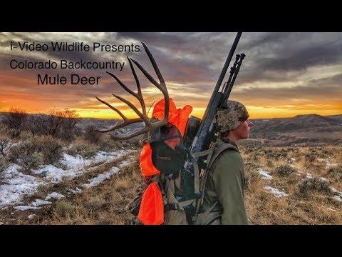 Big Colorado Mule Deer - Backcountry