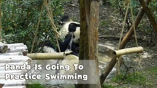 Summer Is Coming. And Panda Is Going To Practice Swimming! | iPanda