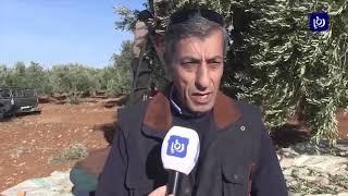مزارعون يتوقعون انخفاض أسعار زيت الزيتون - (9/12/2019)