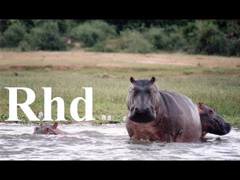 Hippos, Birds, Monkeys, Elephants, Buffaloes.  The dry season. 2018 HD. Documentary.