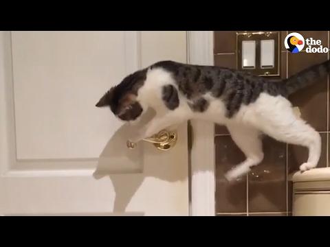 Cat Opens Door For His Friend