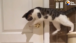 Cat Opens Door For Friend | The Dodo