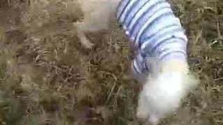 Baixar Kipper shows off his new sweater