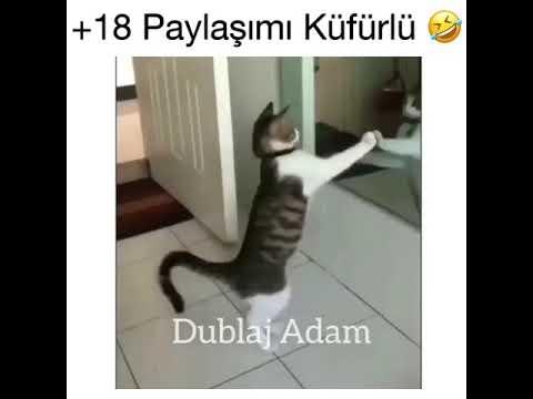 Bu hayatın heyecanı meyecanı Yok Kedi yaparsa :))