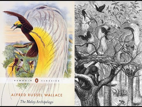 Alfred Russel Wallace and the Birds of Paradise - Sir David Attenborough