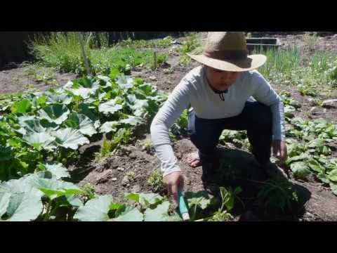 New Roots in Salt Lake City: Food Security through an Urban Farming Revolution