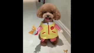 Cute funny cats videos 2018