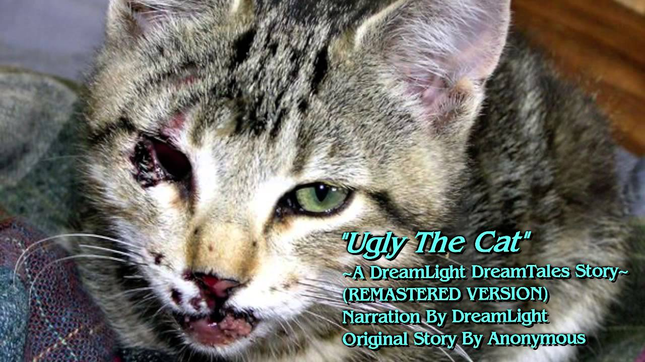 Ugly Cat Pictures Free