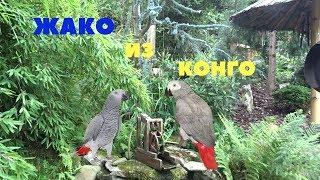 Реально говорящая птичка Жако в глухой чешской деревушке